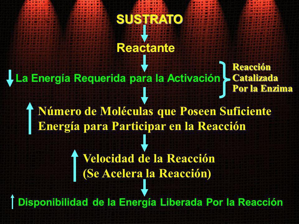 SUSTRATO La Energía Requerida para la Activación Número de Moléculas que Poseen Suficiente Energía para Participar en la Reacción Reactante Velocidad