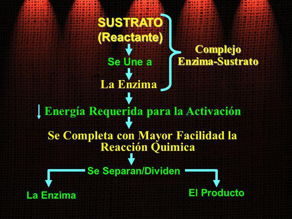 SUSTRATO(Reactante) Se Une a La Enzima Se Completa con Mayor Facilidad la Reacción Quimica Se Separan/Dividen ComplejoEnzima-Sustrato Energía Requerid