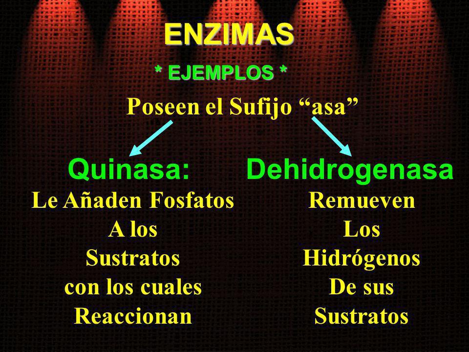 ENZIMAS Quinasa: Le Añaden Fosfatos A los Sustratos con los cuales Reaccionan * EJEMPLOS * Poseen el Sufijo asa Dehidrogenasa Remueven Los Hidrógenos