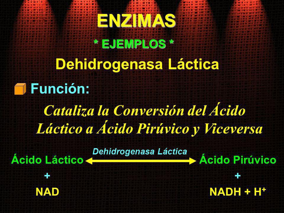 ENZIMAS Función: * EJEMPLOS * Dehidrogenasa Láctica Cataliza la Conversión del Ácido Láctico a Ácido Pirúvico y Viceversa Ácido Láctico + NAD Ácido Pi