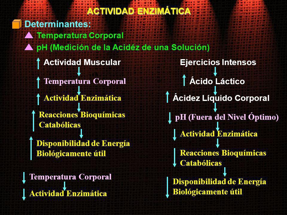 ACTIVIDAD ENZIMÁTICA Temperatura Corporal Actividad Muscular Determinantes: pH (Medición de la Acidéz de una Solución) Temperatura Corporal Actividad