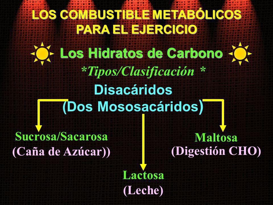 Sucrosa/Sacarosa (Caña de Azúcar)) LOS COMBUSTIBLE METABÓLICOS PARA EL EJERCICIO Los Hidratos de Carbono Disacáridos (Dos Mososacáridos ) Lactosa (Lec