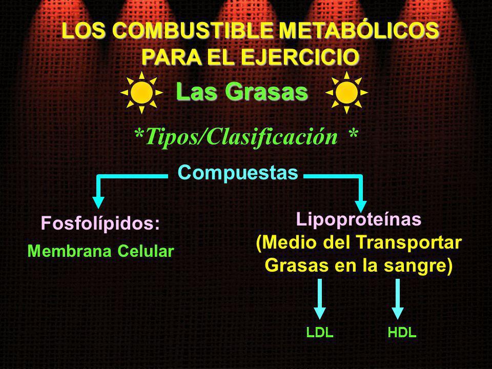 LOS COMBUSTIBLE METABÓLICOS PARA EL EJERCICIO Las Grasas *Tipos/Clasificación * Membrana Celular Compuestas Fosfolípidos: LDL Lipoproteínas (Medio del