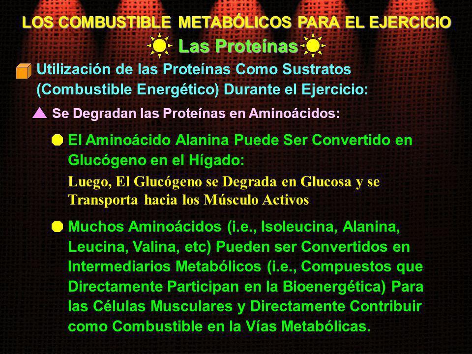 LOS COMBUSTIBLE METABÓLICOS PARA EL EJERCICIO Las Proteínas Se Degradan las Proteínas en Aminoácidos: Utilización de las Proteínas Como Sustratos (Com