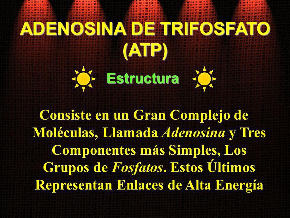 Consiste en un Gran Complejo de Moléculas, Llamada Adenosina y Tres Componentes más Simples, Los Grupos de Fosfatos. Estos Últimos Representan Enlaces