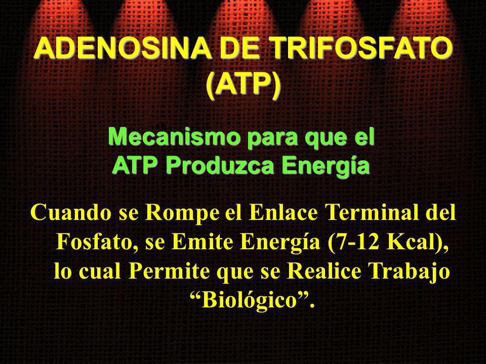 Cuando se Rompe el Enlace Terminal del Fosfato, se Emite Energía (7-12 Kcal), lo cual Permite que se Realice Trabajo Biológico. Mecanismo para que el