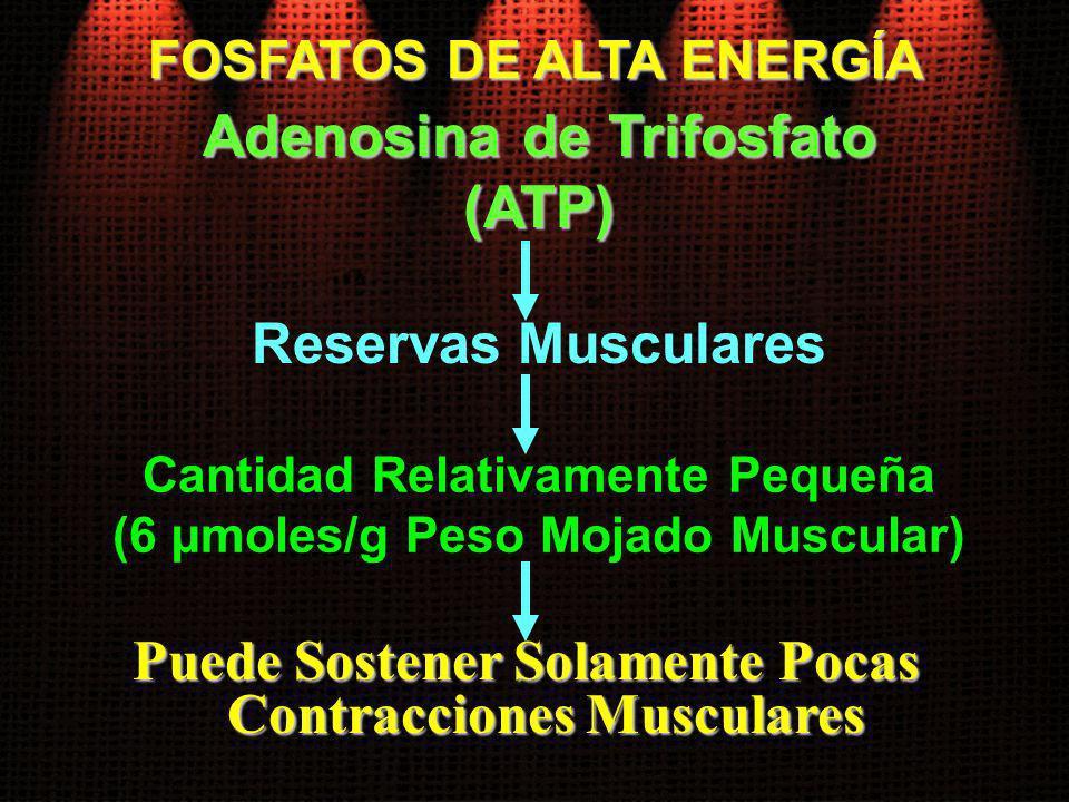 FOSFATOS DE ALTA ENERGÍA Reservas Musculares Adenosina de Trifosfato (ATP) Cantidad Relativamente Pequeña (6 µmoles/g Peso Mojado Muscular) Puede Sost