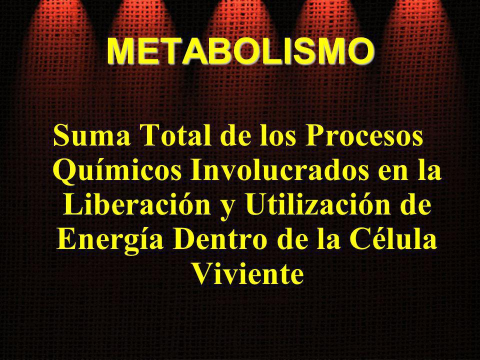 EJERCICIOS PROLONGADOS: Metabolismo Aeróbico Sistema Metabólico Utilizado