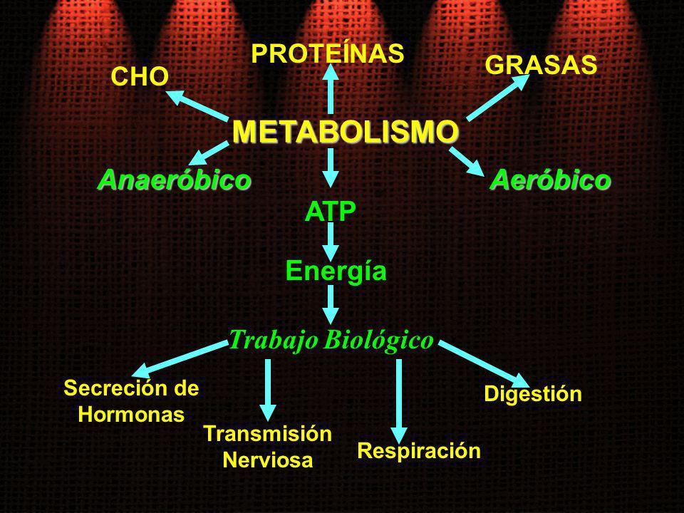 METABOLISMO ATP CHO Energía Secreción de Hormonas PROTEÍNAS GRASAS Trabajo Biológico Transmisión Nerviosa Respiración Digestión AeróbicoAnaeróbico