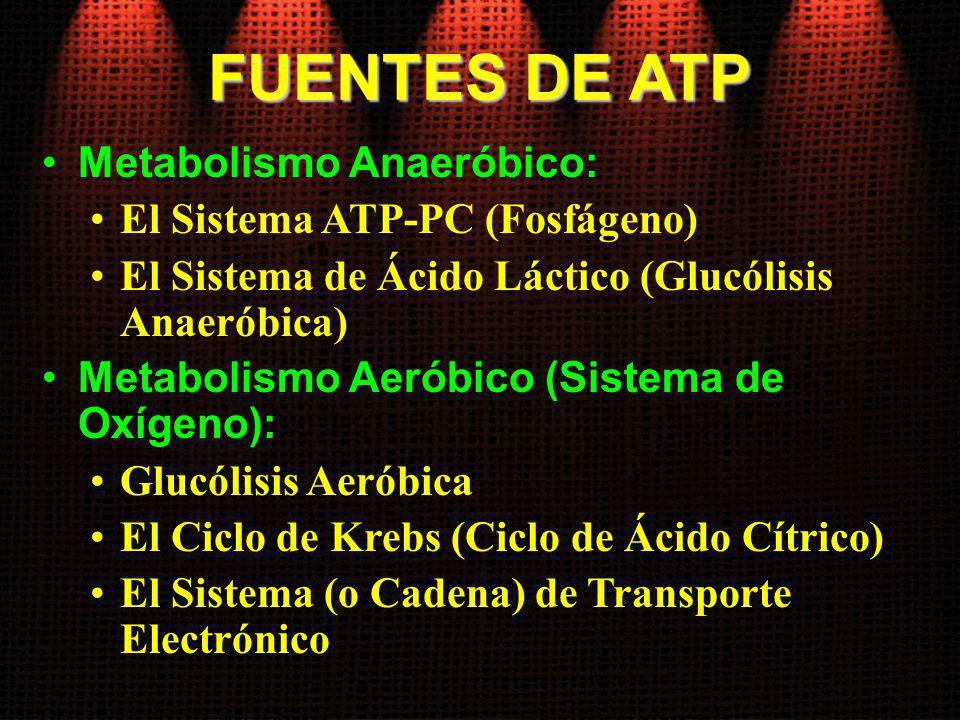 FUENTES DE ATP Metabolismo Anaeróbico: El Sistema ATP-PC (Fosfágeno) El Sistema de Ácido Láctico (Glucólisis Anaeróbica) Metabolismo Aeróbico (Sistema
