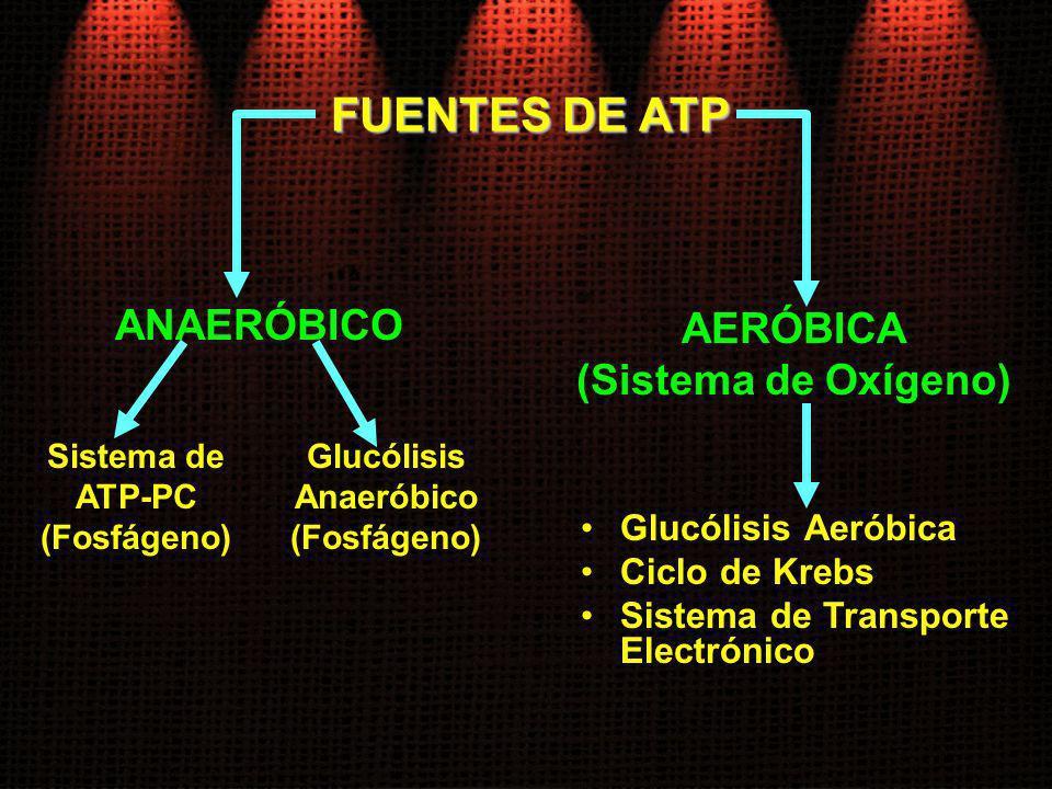 FUENTES DE ATP ANAERÓBICO Sistema de ATP-PC (Fosfágeno) AERÓBICA (Sistema de Oxígeno) Glucólisis Anaeróbico (Fosfágeno) Glucólisis Aeróbica Ciclo de K