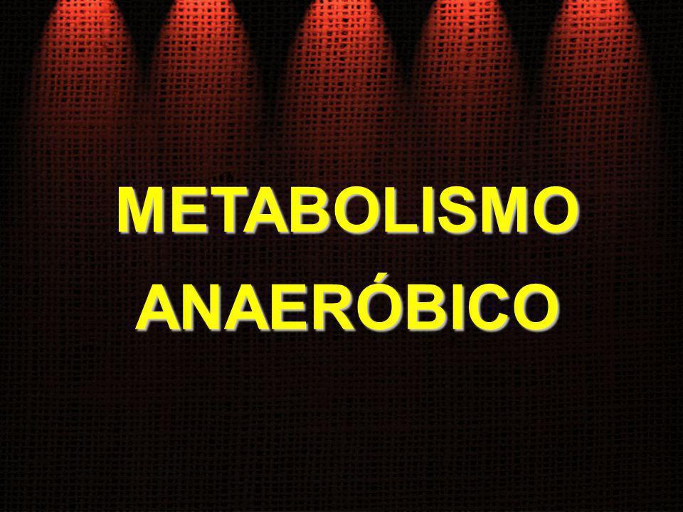 METABOLISMOANAERÓBICO