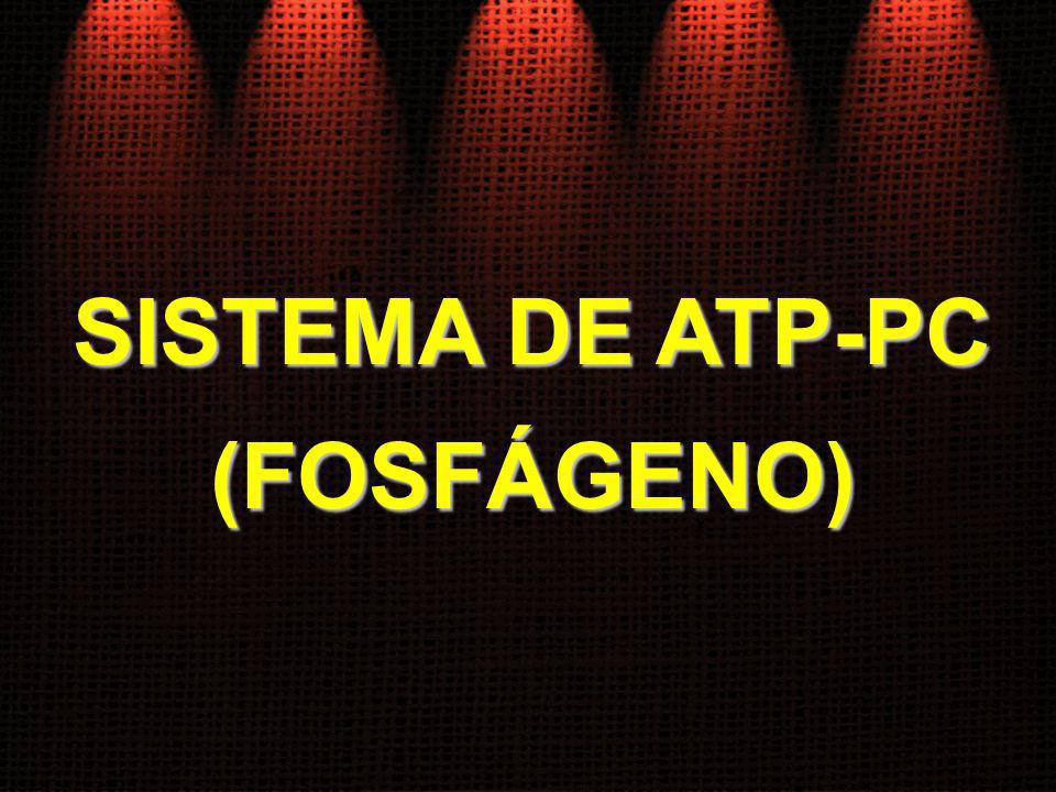 SISTEMA DE ATP-PC (FOSFÁGENO)