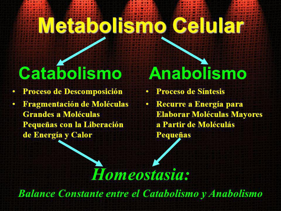 Metabolismo Celular Catabolismo Proceso de Descomposición Fragmentación de Moléculas Grandes a Moléculas Pequeñas con la Liberación de Energía y Calor