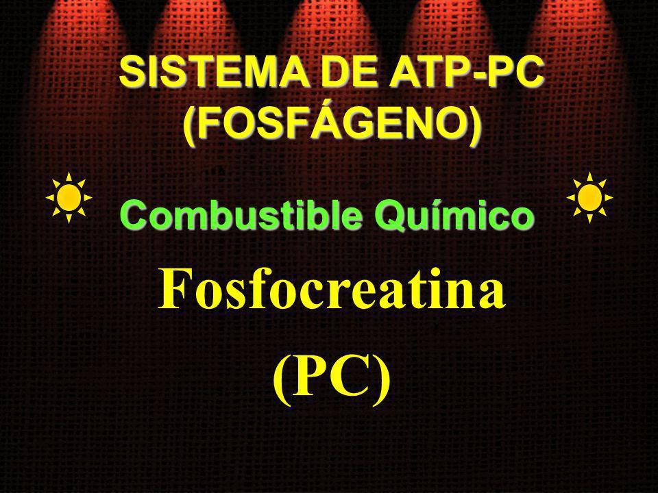 SISTEMA DE ATP-PC (FOSFÁGENO) Fosfocreatina (PC) Combustible Químico