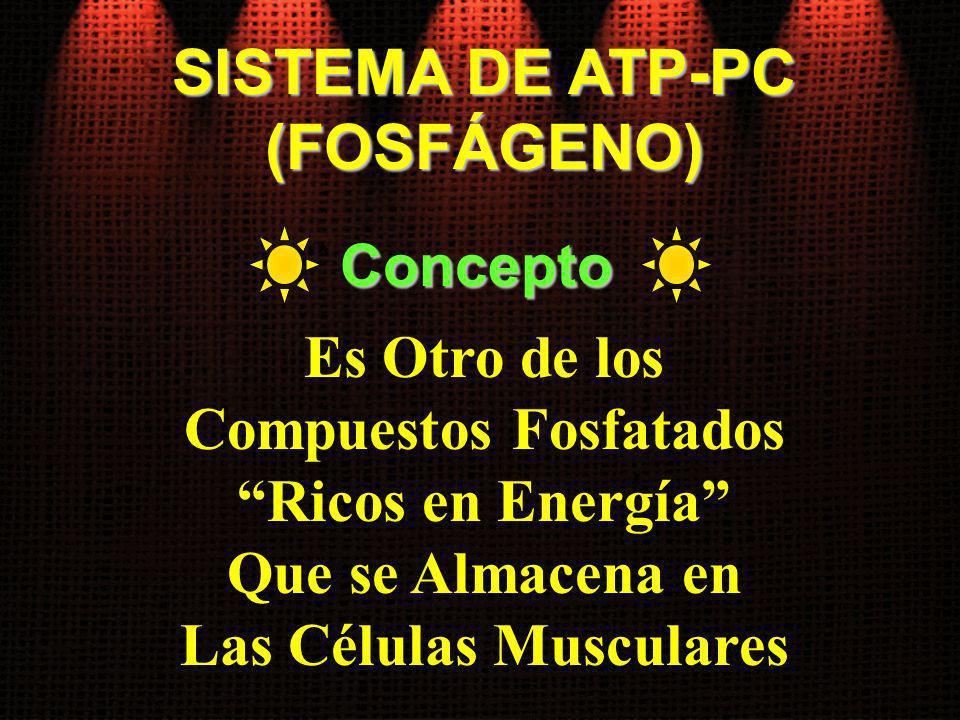 SISTEMA DE ATP-PC (FOSFÁGENO) Es Otro de los Compuestos Fosfatados Ricos en Energía Que se Almacena en Las Células Musculares Concepto