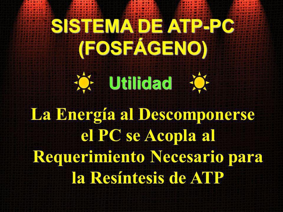 SISTEMA DE ATP-PC (FOSFÁGENO) La Energía al Descomponerse el PC se Acopla al Requerimiento Necesario para la Resíntesis de ATP Utilidad