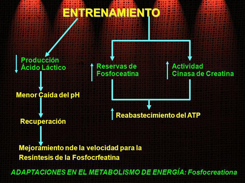 ENTRENAMIENTO Reservas de Fosfoceatina Reabastecimiento del ATP Actividad Cinasa de Creatina Producción Ácido Láctico Menor Caída del pH Recuperación