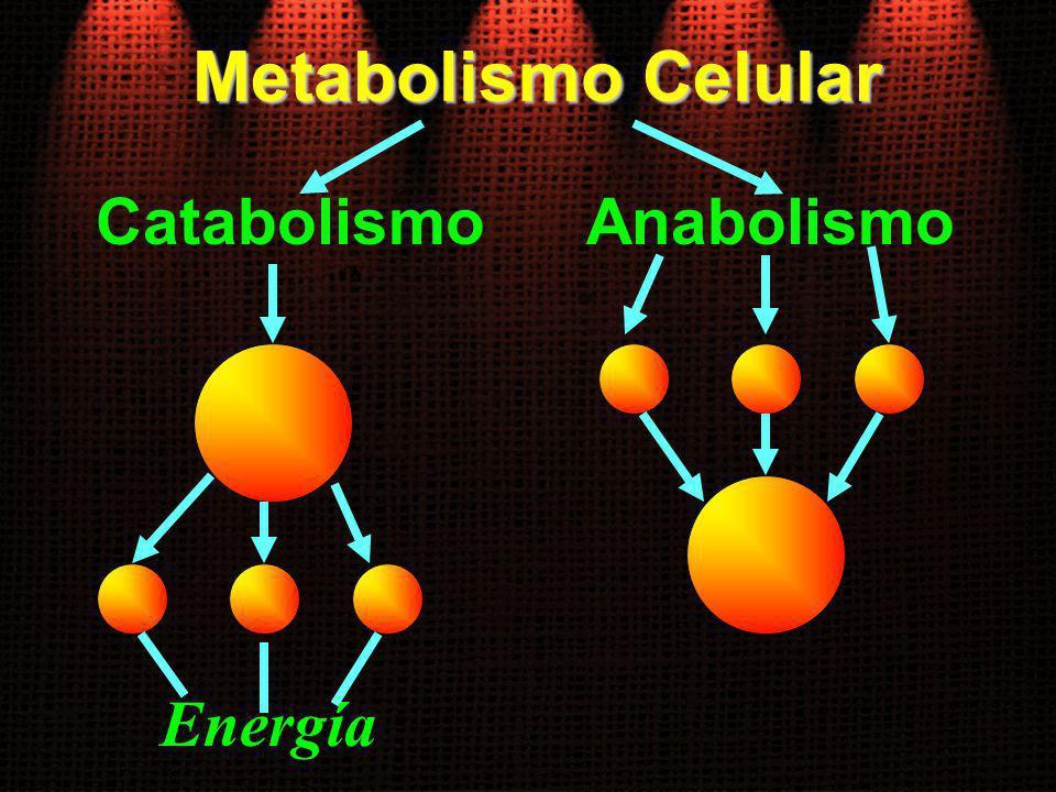 Metabolismo Celular CatabolismoAnabolismo Energía