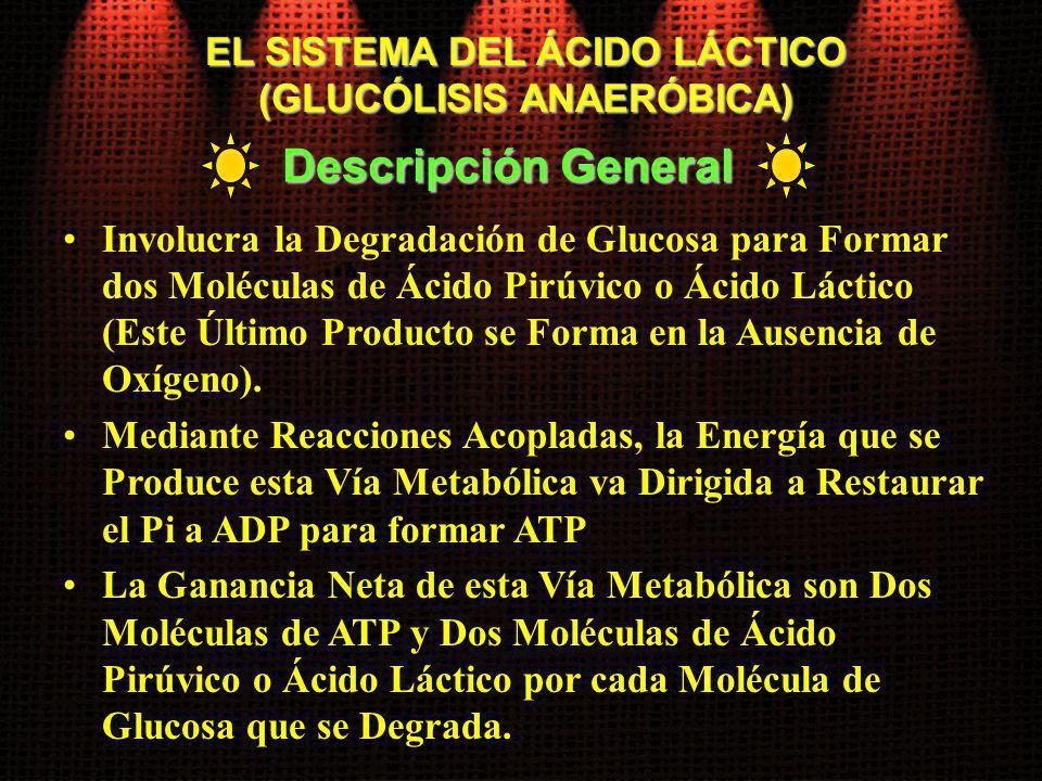 EL SISTEMA DEL ÁCIDO LÁCTICO (GLUCÓLISIS ANAERÓBICA) Involucra la Degradación de Glucosa para Formar dos Moléculas de Ácido Pirúvico o Ácido Láctico (
