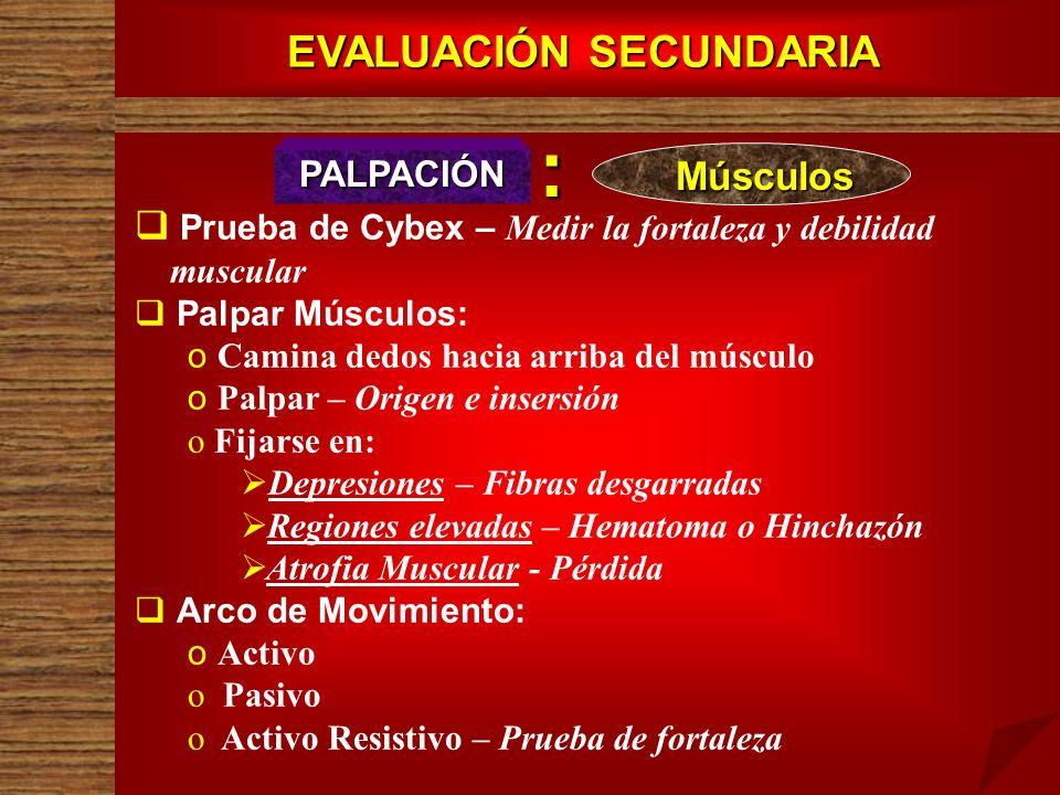 EVALUACIÓN SECUNDARIA PALPACIÓN Prueba de Cybex – Medir la fortaleza y debilidad muscular Palpar Músculos: o o Camina dedos hacia arriba del músculo o
