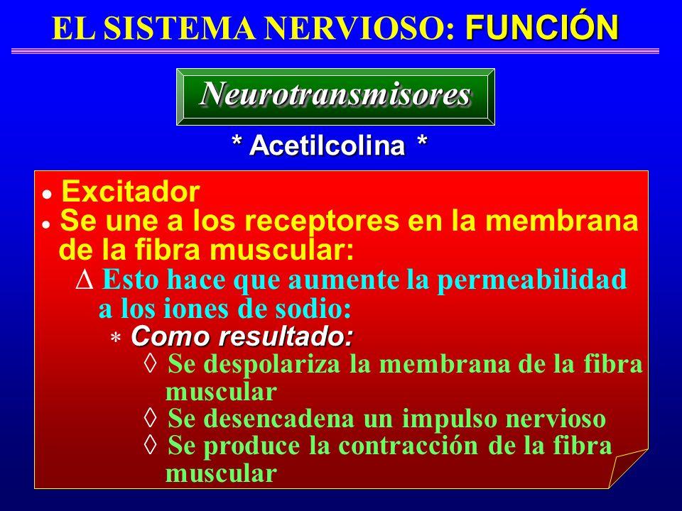 FUNCIÓN EL SISTEMA NERVIOSO: FUNCIÓN * Acetilcolina * NeurotransmisoresNeurotransmisores Excitador Se une a los receptores en la membrana de la fibra