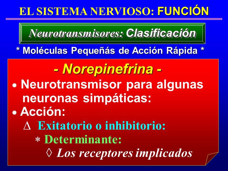 FUNCIÓN EL SISTEMA NERVIOSO: FUNCIÓN * Moléculas Pequeñás de Acción Rápida * Neurotransmisores: Clasificación Neurotransmisor para algunas neuronas si