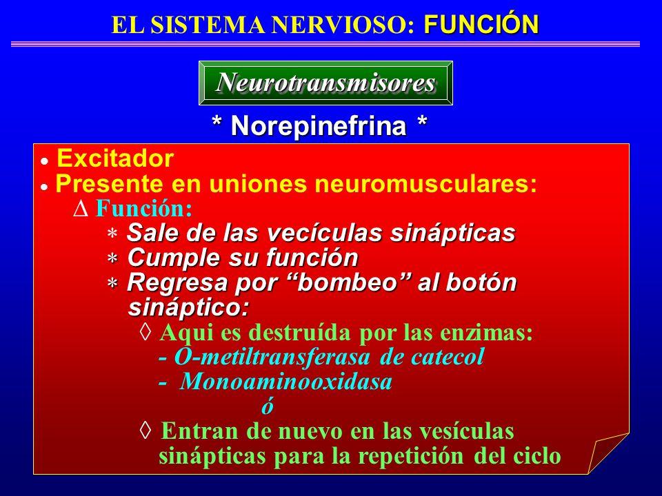 FUNCIÓN EL SISTEMA NERVIOSO: FUNCIÓN * Norepinefrina * NeurotransmisoresNeurotransmisores Excitador Presente en uniones neuromusculares: Función: Sale