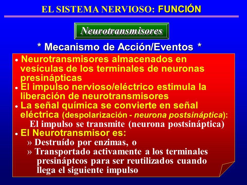 FUNCIÓN EL SISTEMA NERVIOSO: FUNCIÓN * Mecanismo de Acción/Eventos * NeurotransmisoresNeurotransmisores Neurotransmisores almacenados en vesículas de