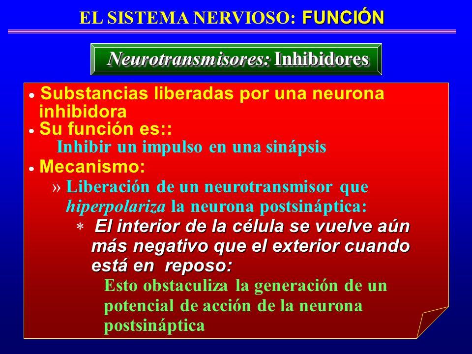 FUNCIÓN EL SISTEMA NERVIOSO: FUNCIÓN Neurotransmisores: Inhibidores Substancias liberadas por una neurona inhibidora Su función es:: Inhibir un impuls
