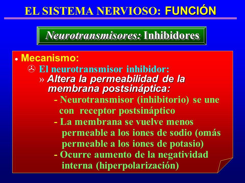 FUNCIÓN EL SISTEMA NERVIOSO: FUNCIÓN Neurotransmisores: Inhibidores Mecanismo: > El neurotransmisor inhibidor: Altera la permeabilidad de la » Altera