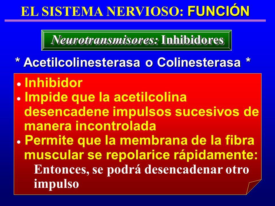FUNCIÓN EL SISTEMA NERVIOSO: FUNCIÓN * Acetilcolinesterasa o Colinesterasa * Inhibidor Impide que la acetilcolina desencadene impulsos sucesivos de ma