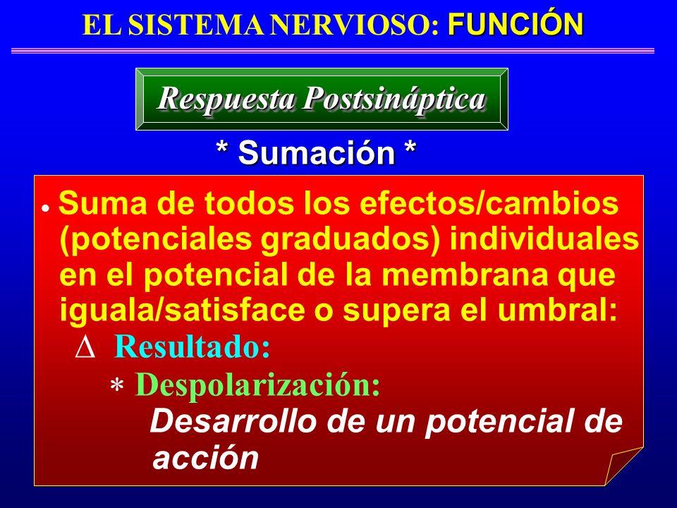 FUNCIÓN EL SISTEMA NERVIOSO: FUNCIÓN * Sumación * Respuesta Postsináptica Suma de todos los efectos/cambios (potenciales graduados) individuales en el