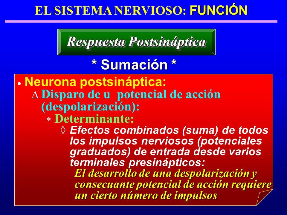 FUNCIÓN EL SISTEMA NERVIOSO: FUNCIÓN * Sumación * Respuesta Postsináptica Neurona postsináptica: Disparo de u potencial de acción (despolarización): D