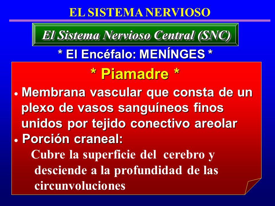 * Piamadre * El Sistema Nervioso Central (SNC) EL SISTEMA NERVIOSO Membrana vascular que consta de un plexo de vasos sanguíneos finos plexo de vasos s