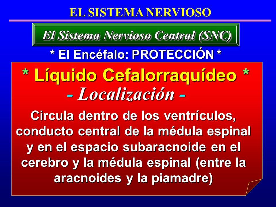 * Líquido Cefalorraquídeo * El Sistema Nervioso Central (SNC) EL SISTEMA NERVIOSO Circula dentro de los ventrículos, conducto central de la médula esp