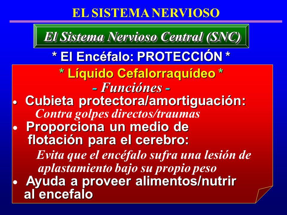* Líquido Cefalorraquídeo * El Sistema Nervioso Central (SNC) EL SISTEMA NERVIOSO Cubieta protectora/amortiguación: Cubieta protectora/amortiguación:
