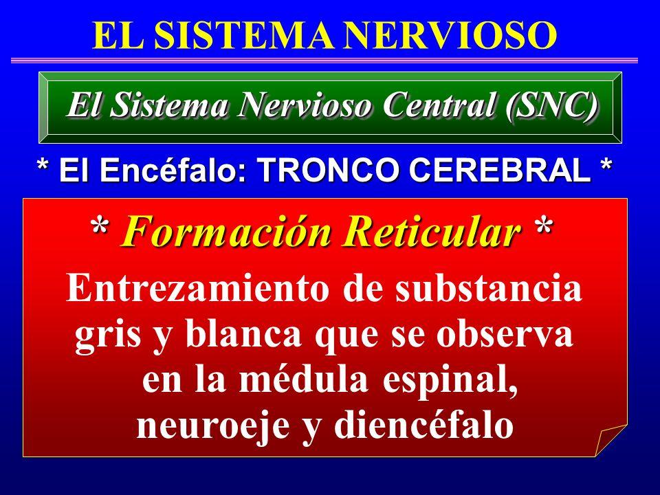 Entrezamiento de substancia gris y blanca que se observa en la médula espinal, neuroeje y diencéfalo * Formación Reticular * EL SISTEMA NERVIOSO * El
