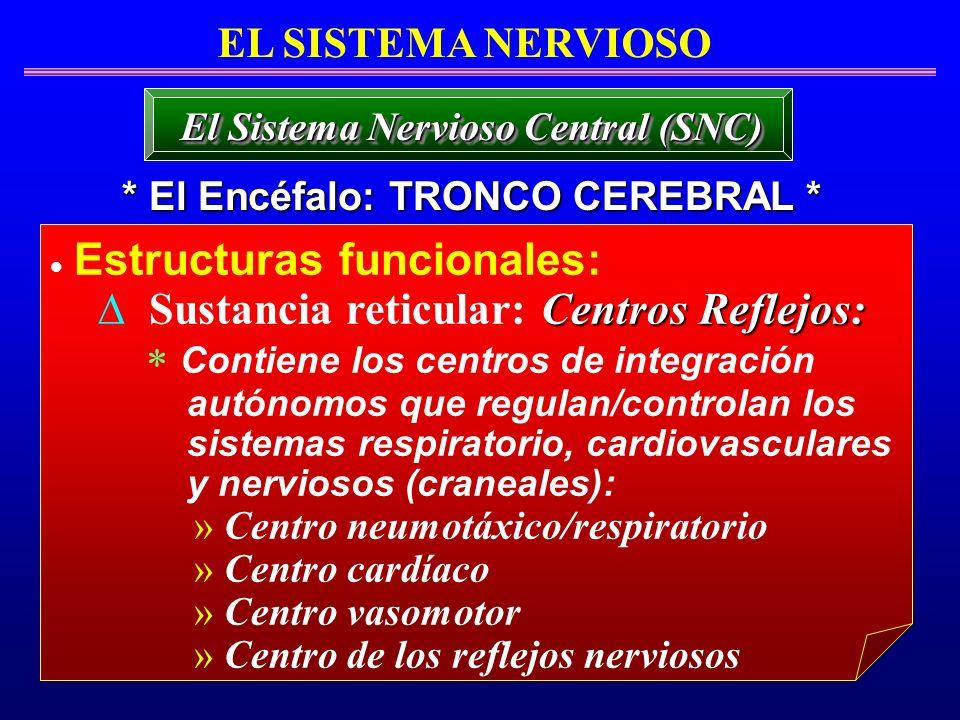 Estructuras funcionales: Centros Reflejos: Sustancia reticular: Centros Reflejos: Contiene los centros de integración autónomos que regulan/controlan
