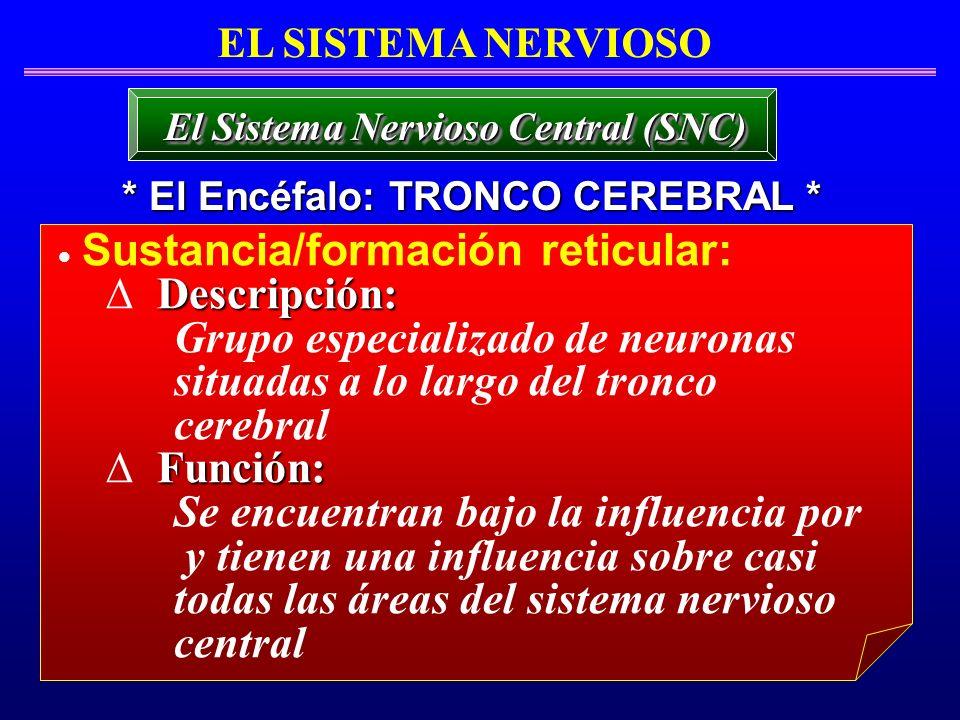 Sustancia/formación reticular: Descripción: Grupo especializado de neuronas situadas a lo largo del tronco cerebral Función: Se encuentran bajo la inf
