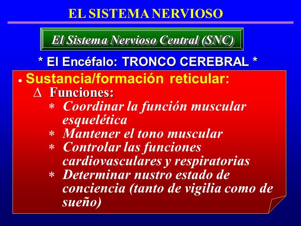 Sustancia/formación reticular: Funciones: Coordinar la función muscular esquelética Mantener el tono muscular Controlar las funciones cardiovasculares