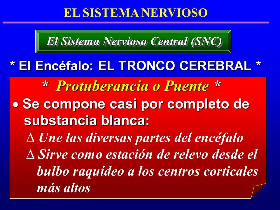 EL SISTEMA NERVIOSO * El Encéfalo: EL TRONCO CEREBRAL * El Sistema Nervioso Central (SNC) Se compone casi por completo de Se compone casi por completo