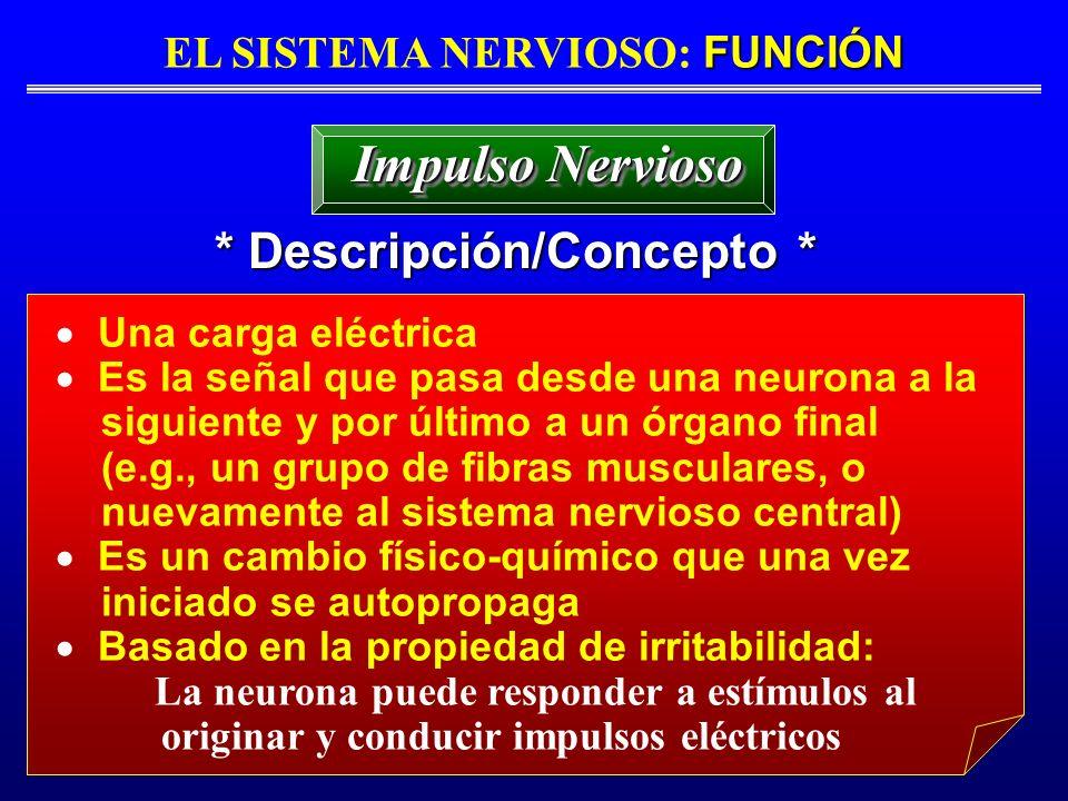 FUNCIÓN EL SISTEMA NERVIOSO: FUNCIÓN * Descripción/Concepto * Impulso Nervioso Una carga eléctrica Es la señal que pasa desde una neurona a la siguien