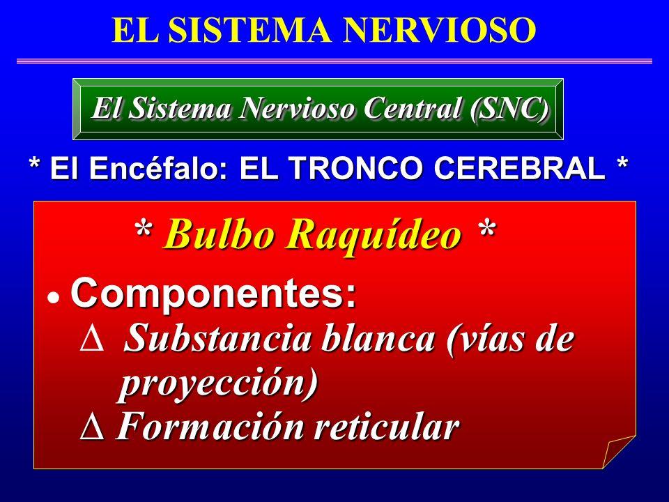 Componentes: Substancia blanca (vías de proyección) proyección) Formación reticular Formación reticular EL SISTEMA NERVIOSO * El Encéfalo: EL TRONCO C