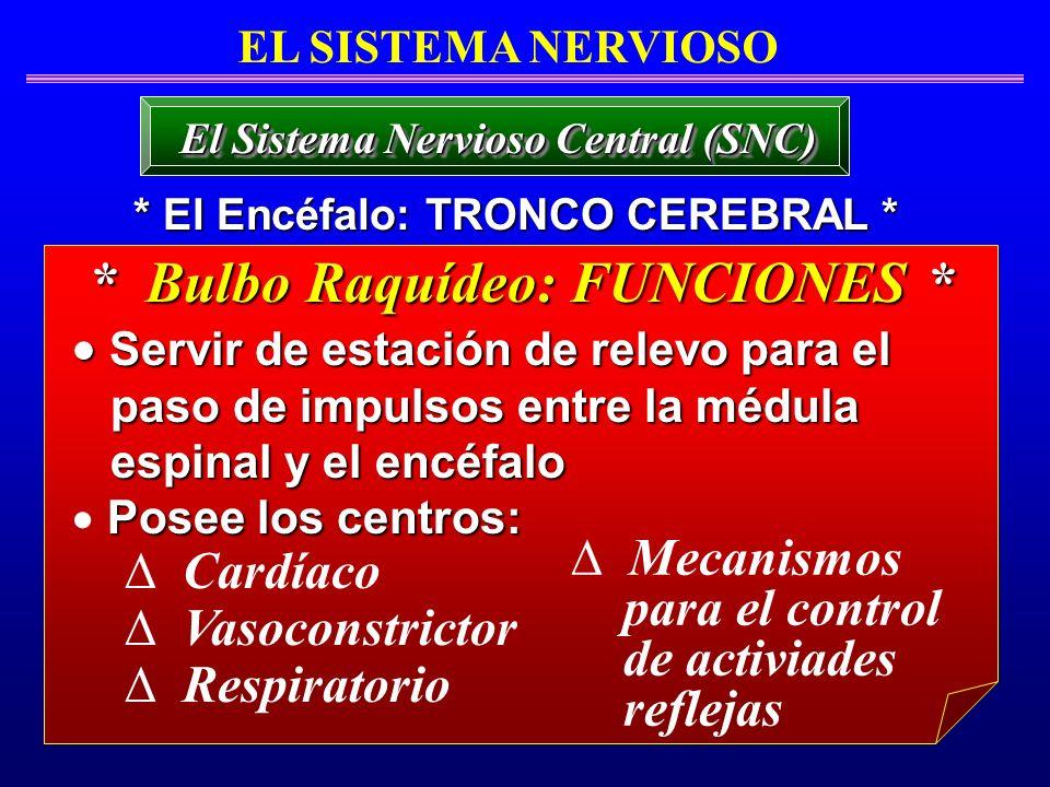 EL SISTEMA NERVIOSO * El Encéfalo: TRONCO CEREBRAL * El Sistema Nervioso Central (SNC) * Bulbo Raquídeo: FUNCIONES * Servir de estación de relevo para
