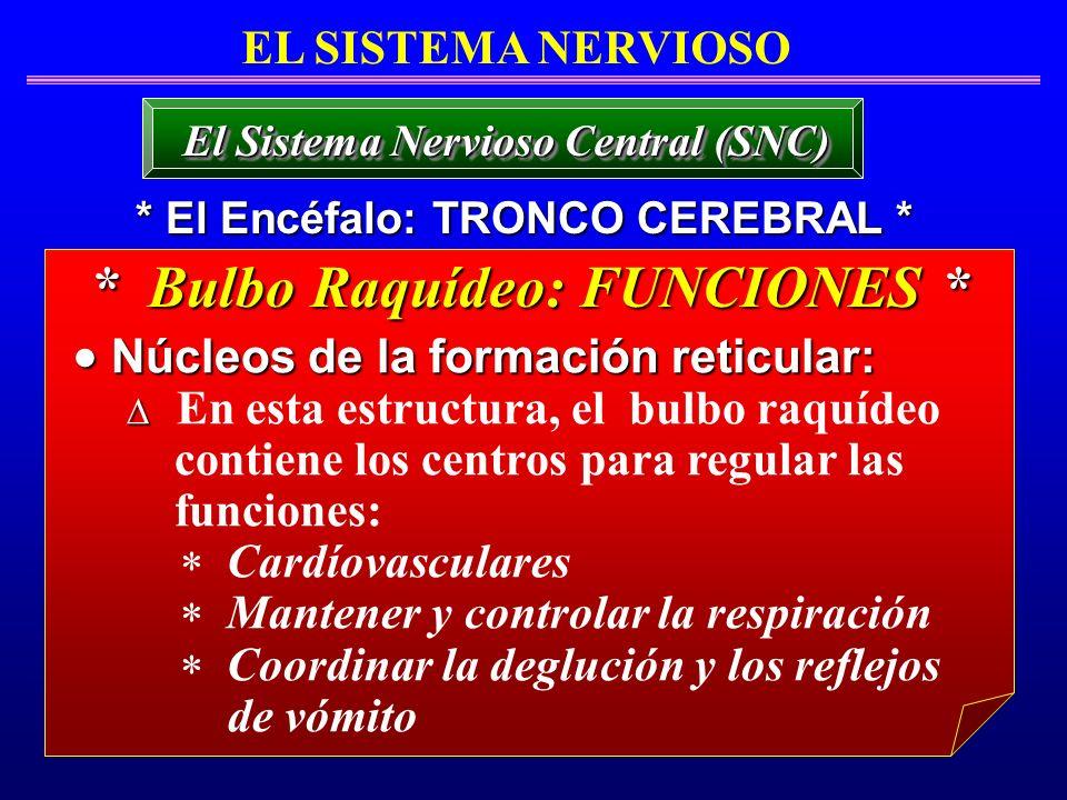 EL SISTEMA NERVIOSO * El Encéfalo: TRONCO CEREBRAL * El Sistema Nervioso Central (SNC) * Bulbo Raquídeo: FUNCIONES * Núcleos de la formación reticular