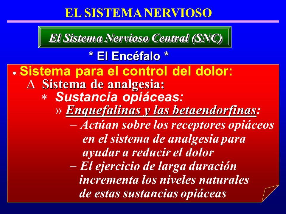 Sistema para el control del dolor: Sistema de analgesia: Sustancia opiáceas: Enquefalinas y las betaendorfinas » Enquefalinas y las betaendorfinas: Ac