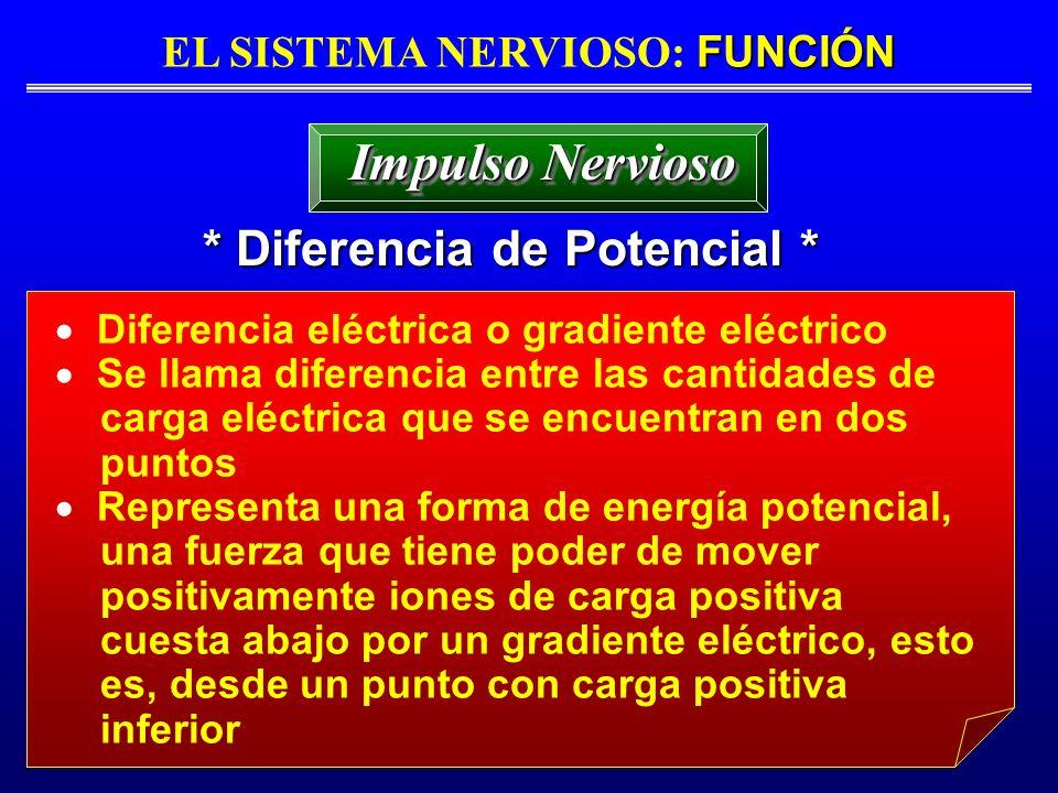 FUNCIÓN EL SISTEMA NERVIOSO: FUNCIÓN * Diferencia de Potencial * Impulso Nervioso Diferencia eléctrica o gradiente eléctrico Se llama diferencia entre