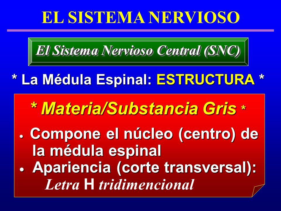 Compone el núcleo (centro) de Compone el núcleo (centro) de la médula espinal la médula espinal Apariencia (corte transversal): Apariencia (corte tran