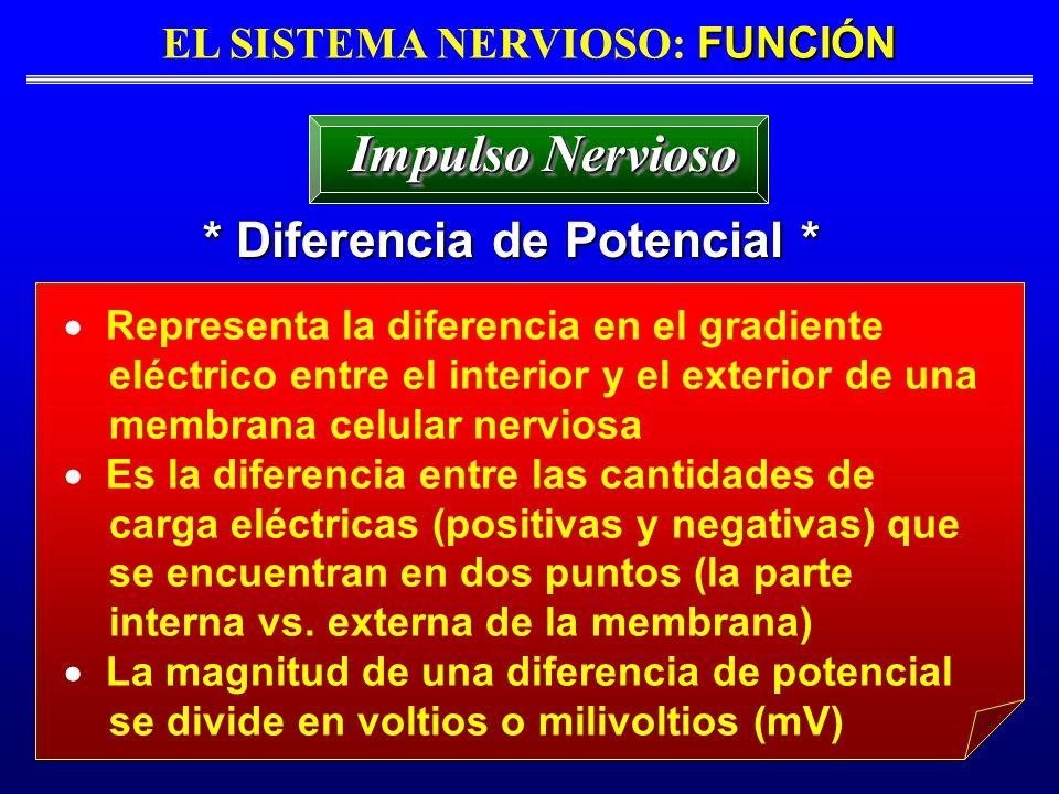 FUNCIÓN EL SISTEMA NERVIOSO: FUNCIÓN * Diferencia de Potencial * Impulso Nervioso Representa la diferencia en el gradiente eléctrico entre el interior